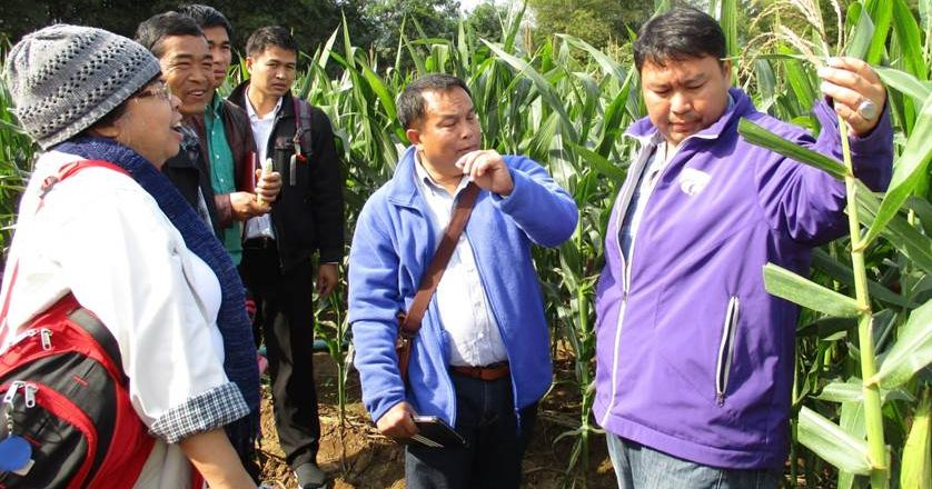 Thai experience on village based seed production to promote stress tolerant maize varieties